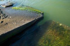 Bloques de cemento semisumergidos en el borde de una bahía, con las algas verdes visibles Imagen de archivo libre de regalías