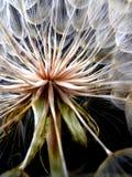 Bloss blomma Arkivbilder