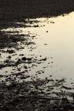 Blossade marginaler av en lagun på Milford punkt, Connecticut arkivbilder