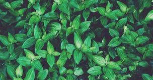Blossar den naturliga bästa sikten för ny sund bio bakgrundssuddighet, abstrakt suddig flora och ljus sommar solljusbakgrunden i  Arkivfoto