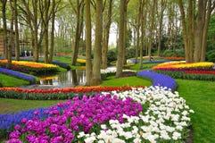 blossing的五颜六色的keukenhof公园郁金香 图库摄影