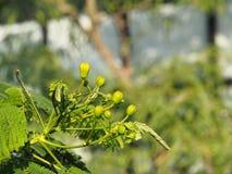 Blossoimg drzewo z natury tłem Zdjęcia Stock
