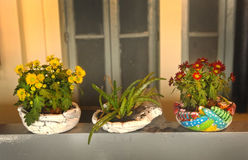 Blossoing窗台的盆栽植物 库存照片