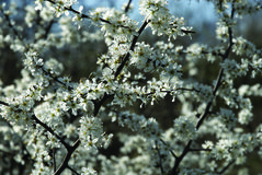 Blossom 1 royalty free stock images