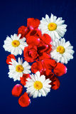 Blossom. Petals of white and red flowers on a blue background Stock Images