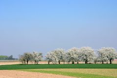 Free Blossom Stock Images - 2531384