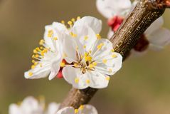 Blossom Stock Photography