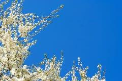 Blossom. Stock Photography