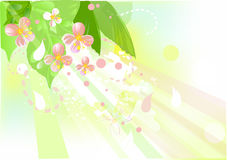 Blossom apple tree. Background with flowers of blossom apple tree Stock Photo
