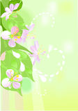 Blossom apple tree. Background with blossom apple tree Royalty Free Stock Photography