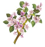 Blossom apple tree branch. With pink flowers stock illustration