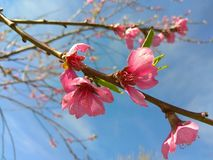 Flowers blossom in spring stock photography