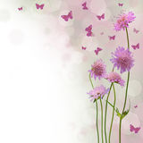Blossom Background - Floral Border Stock Photo
