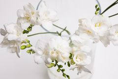 Blossom background of white orchid in vase Royalty Free Stock Photos