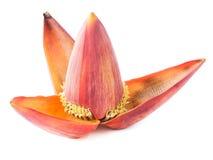 Blossom banana isolated on white Stock Photography