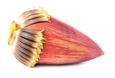 Blossom banana Stock Images