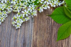 Blossom bird cherry on aged boards antique table stock image