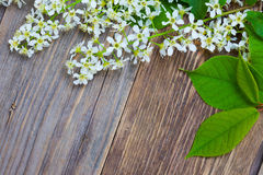 Blossom bird cherry with green leaves. On aged textured boards antique table with copy space Royalty Free Stock Photo