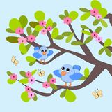 Blossom, Birds and Butterflies. Two blue birds sitting in a tree and looking at each other Stock Image