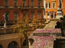Blossom in Bologna Royalty Free Stock Images