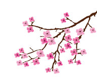Blossom branch Royalty Free Stock Photography