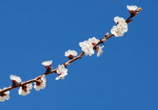 Blossom branch. With a many flower stock photos