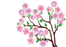 Blossom Branch. Stock Photography