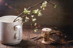 Blossom branch Royalty Free Stock Photo