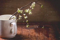 Blossom branch Stock Photography