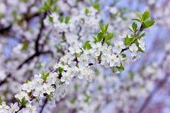 Blossom branch stock photos