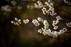 Blossom, Branch, Flower, Spring stock photography