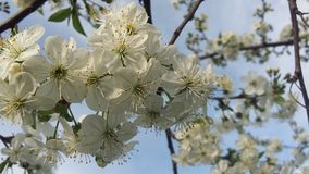 Blossom, Branch, Flower, Spring stock photography