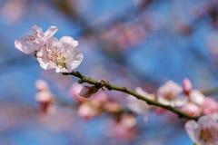 Blossom, Branch, Flower, Spring stock image