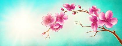 Blossom branch. Illustration of a blossom branch Stock Photo