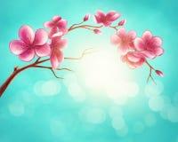 Blossom branch. Illustration of a blossom branch Royalty Free Illustration