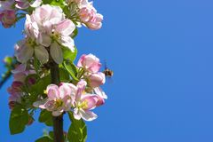 Blossom, Branch, Pink, Flower stock image