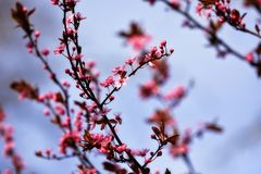 Blossom, Branch, Pink, Spring stock images