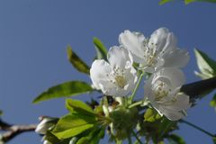 Blossom, Branch, Sky, Flower stock image