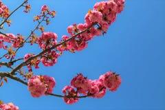 Blossom, Branch, Sky, Pink stock photo