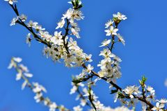 Blossom, Branch, Sky, Spring stock photos