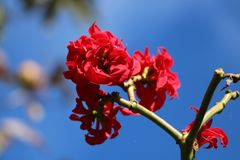 Blossom, Branch, Sky, Spring royalty free stock photo