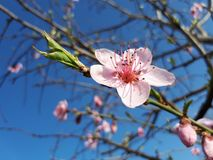 Blossom, Branch, Spring, Flower stock images