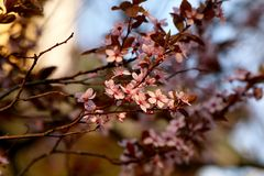 Blossom, Branch, Spring, Pink stock photos
