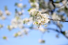 Blossom, Branch, Spring, Sky stock photos