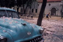 Blossom Car. A young boy in Havana, Cuba, attempts to catch falling blossoms in his hat, immediately after a thunderstorm stock photography