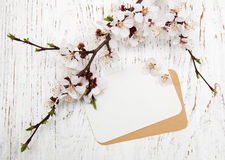 Blossom with card Royalty Free Stock Images