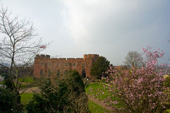 Blossom and castle Royalty Free Stock Images