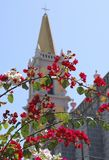 Blossom by Cathedral. Bright red blossom with a background of Mazatlan Cathedral, Mexico Royalty Free Stock Photo