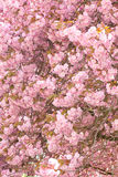 Blossom ceiling Stock Image