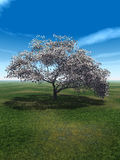Blossom_Cherry. Alone blossom tree and beautiful sky - 3d landscape scene Stock Photo